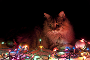 Christmas Cat: Christmas with the furbaby