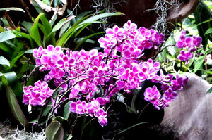 orchid colours & shapes10: colourful complex and delicate orchid flowers