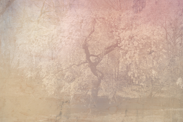 Collage Fantasy Baum 7: