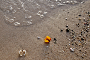 Sea shells lying on the sand: Sea shells lying on the sand in the afternoon sunset time. The golden sand at the beach is full of small sea shells that are washed out by the sea waves. Photo is good for web design but also for print work of Arts, Wall Art, arts and crafts as well as pr