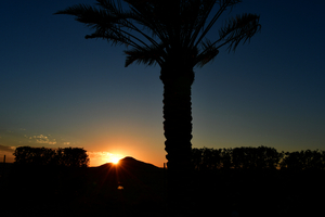 Sunset silhouettes: Sunset time and dark silhouettes are formed from trees , sand hills and bushes