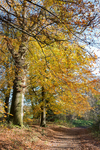 Autumn forest footpath