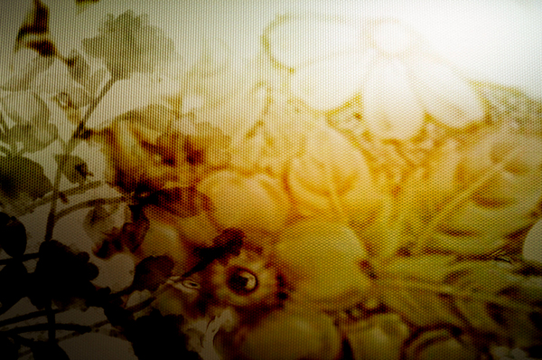 Floral background 71