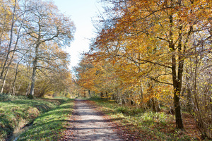 Autumn trail: A bridleway through deciduous woodland in West Sussex, England, in autumn.