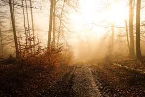 sun and fog in winter forest