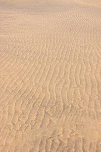 Sand rills texture: Sand rills on a beach at low tide in Cornwall, England.