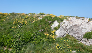 Coastal path and flowers