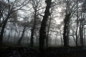 Foggy wood 4