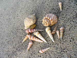 bunch of shells