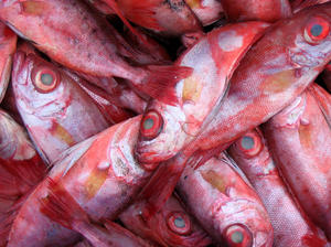 fish: fresh local fish at the market