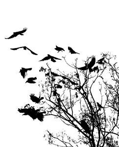 Silhouette of Crows: Silhouette of Crows