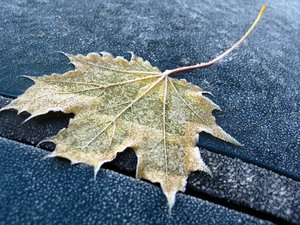 frozen leaf: a frozen leaf on a frozen car early in the morning