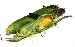 corn cobs 2: none