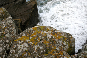 Coastal lichens: Lichens growing on coastal rocks in Devon, England.