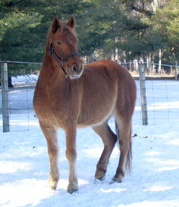 Horse in Winter 1