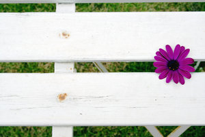 flower on chair