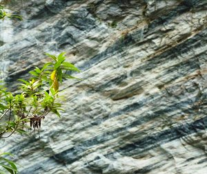 Plant against rock: A plant set starkly against layered rock in the Alishan mountain range.
