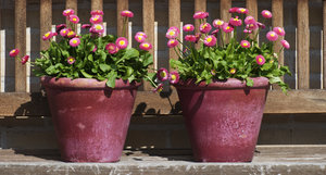 Flower pots: summer flowers