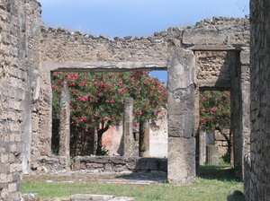 Pompeii garden: Blooming tree in a garden between the ruins of Pompeii, Italy.