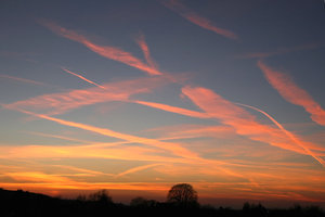 Streaky sky: Jet trails streaking the sky at sunset in West Sussex, England.