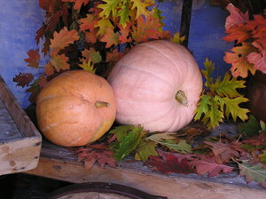 Pumpkins in the autumn