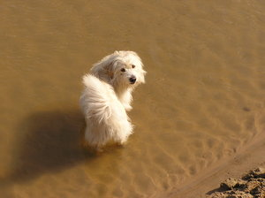 A dog in the water: Well, a shaggy dog in the river, as you see.Please mail me if you have used my photos (or comment it). Thanks!I would be extremely happy to see the final work even if you think it is nothing special! For me it is (and for my portfolio)!