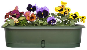 A flowerpot with pansies