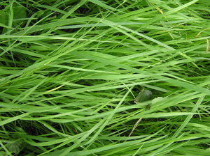 Grass texture: Just some grass on a meadow. Please let me know if you decide to use it!