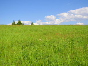 Meadow: A meadow to the horizon.Please comment this shot or mail me if you found it useful. Just to let me know!I would be extremely happy to see the final work even if you think it is nothing special! For me it is (and for my portfolio).