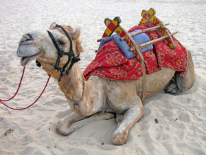 Camel: no description