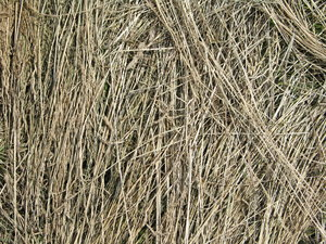 Grass straw texture