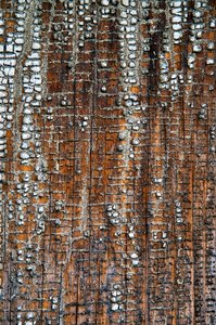 Weathered Wood 3