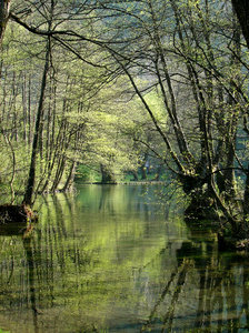 Spring of river Bosnia: