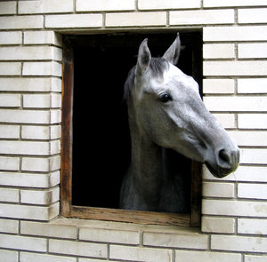 horse in window: No description