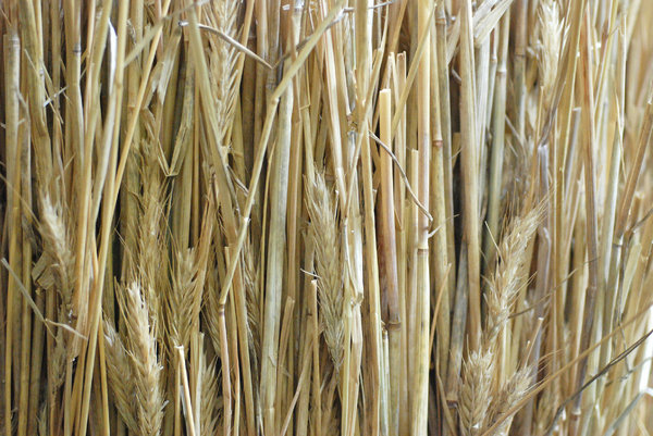 Straw texture: Straw is an agricultural by-product, the dry stalk of a cereal plant, after the grain or seed has been removed.