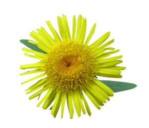 Yellow flower: Just a small daisy. Please let me know if you decide to use it!