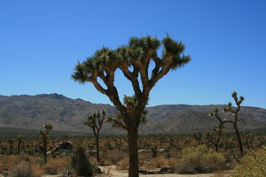 Josua tree National Park: Some pictures of Joshua Tree National Park, California