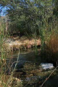 Ash Meadows: Some pictures of Ash Meadows, National Wildlife refuge , Nevada