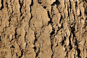 Making Tracks 1: Tracks in the mud from heavy construction vehicles.