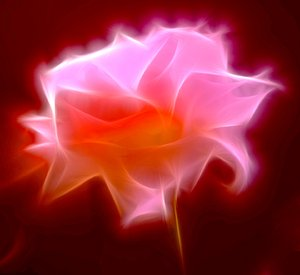 Abstract Rose 1: A fractalised rose, gloriously lit up!