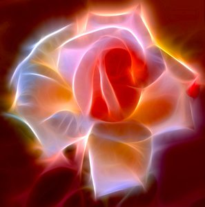 Abstract Rose 3: A fractalised rose, gloriously lit up!