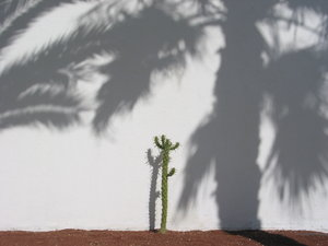 Lonely cactus: This cactus was captured on the Spanish island Lanzarote in May 2005.