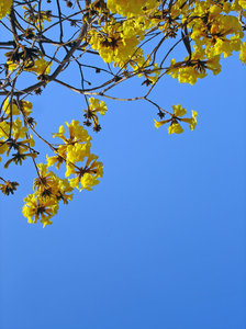 Spring fever: Tree in spring bloom