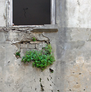 Life: Old abandoned house, Beirut