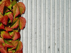 Wall and Plant 1: Concrete wall and plant.