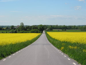 road and yellow: road and rape fields, Skane, Sweden.