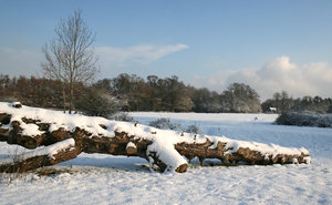 Winter park: A fallen tree amid freshly fallen snow in a park in West Sussex, England.