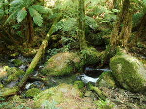 Alpine stream: Alpine stream on Mount Donna Buang, Victoria, Australia