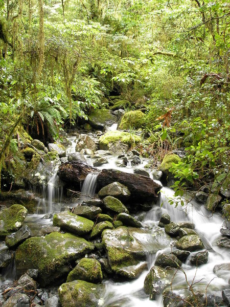 Mountain Stream 1: A stream in Fiordland, New Zealand.