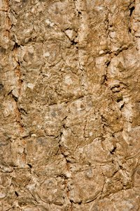 Bark Texture 1: A very rough bark texture